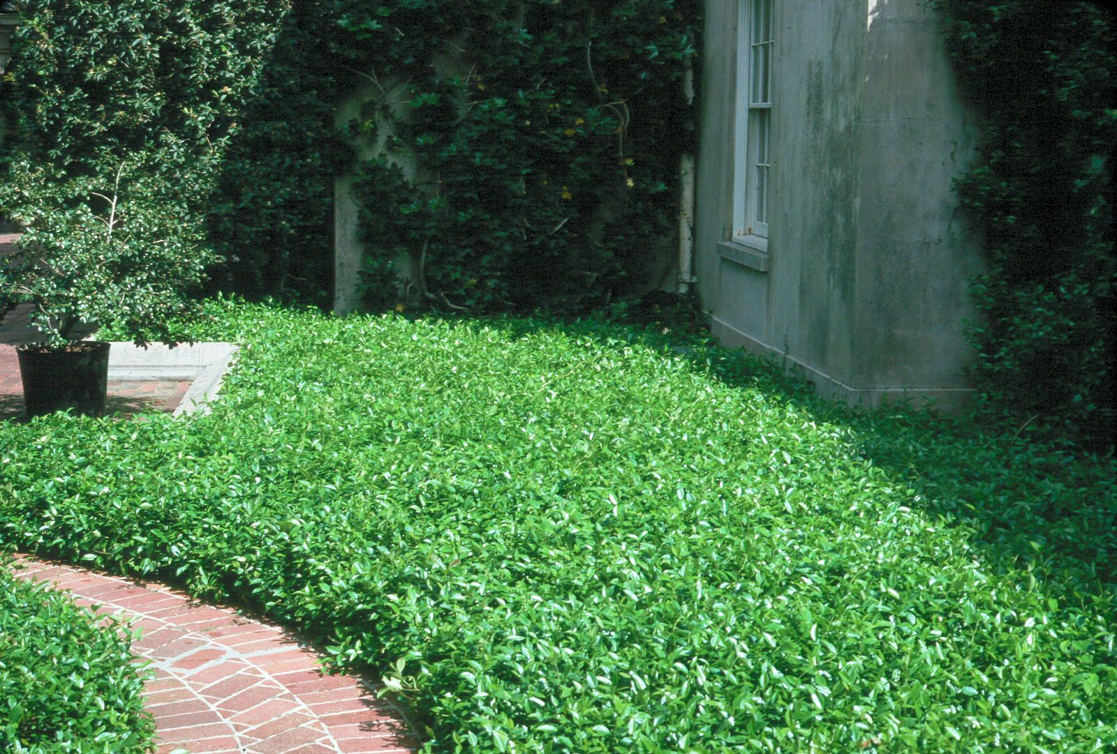 Image result for ground covers