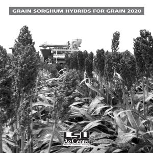 Grain Sorghum Hybrids for Grain 2020