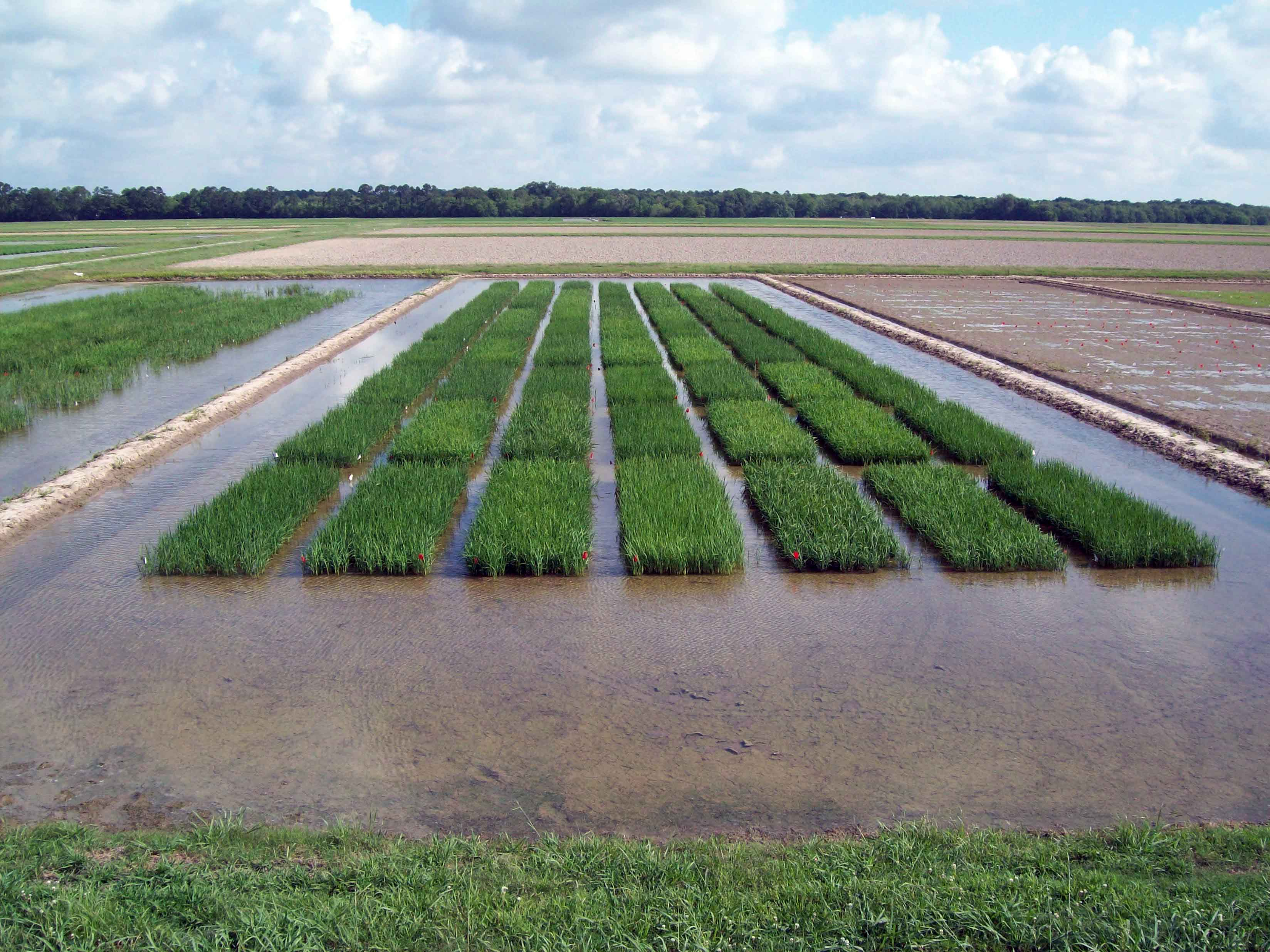 New Methods to Evaluate Optimum Rice Planting Date