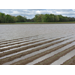 Flooded fields cause concern for Louisiana farmers