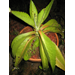 Succulent Question