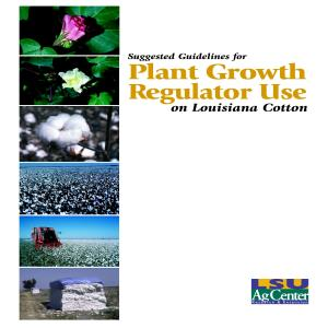 Suggested Guidelines for Plant Growth Regulator Use on Louisiana Cotton