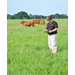 AgCenter researchers receive grant to study grass-fed beef production