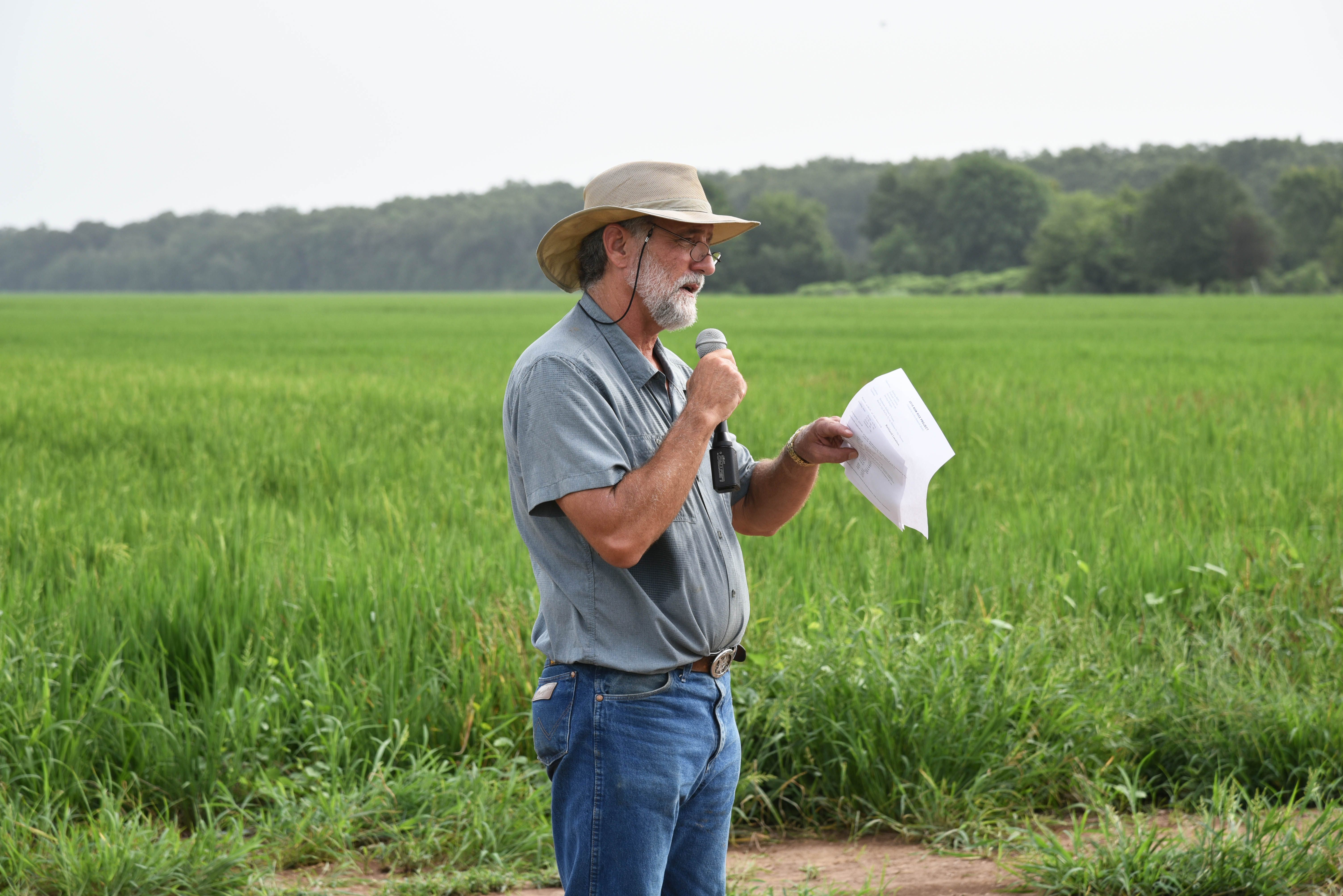 Keith Collins at row rice field day.jpg thumbnail