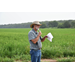 Furrow irrigation featured at rice field day