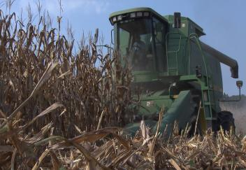 Bad weather and low commodity prices take a toll on Louisiana's agriculture industry
