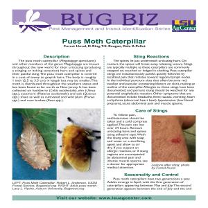 Bug Biz: Pest Management and Insect Identification Series - Puss Moth Caterpillar