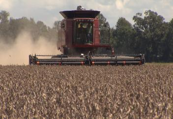 Soybean crop falls short of last years record