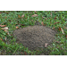Its time to control fire ants
