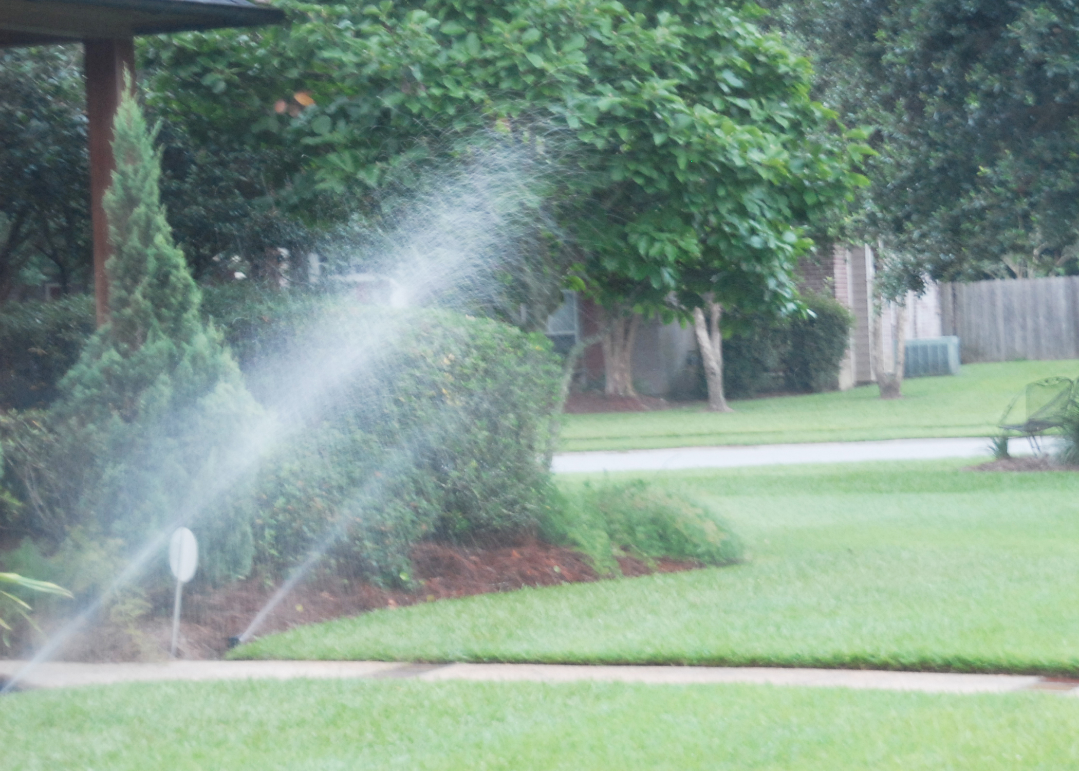 Deal with dry weather with proper watering