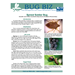 Bug Biz: Spined Soldier Bug
