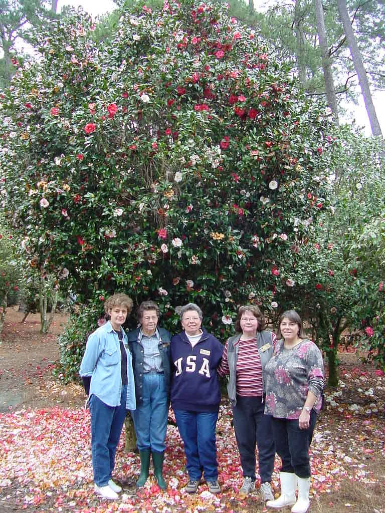 Group photo of people in front of large camellia