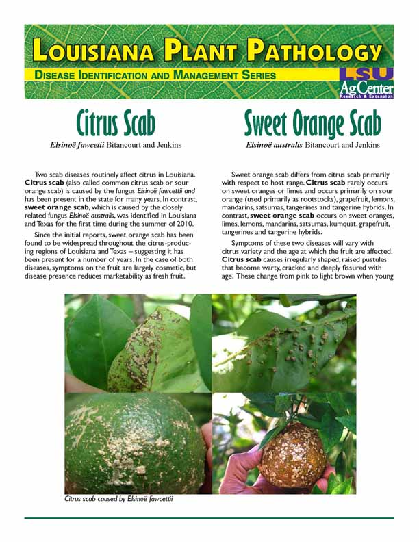 Louisiana Plant Pathology:  Citrus Scab and Sweet Orange Scab