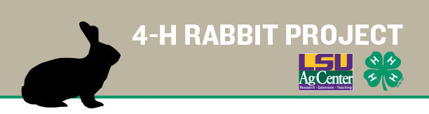 new Rabbit Project header.jpg thumbnail