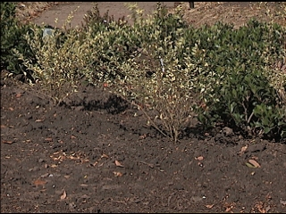 Replanting Storm-ravaged Landscapes Begins