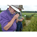 Diseases, weather highlight small grains field day