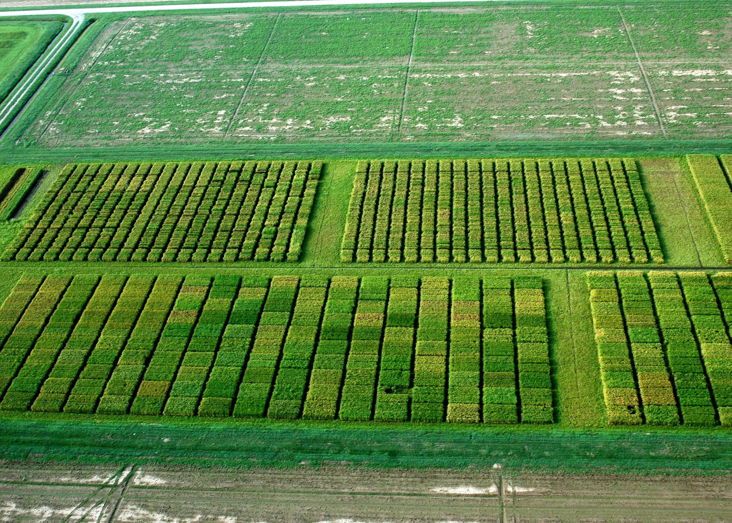 aerial of test plots1.jpg thumbnail