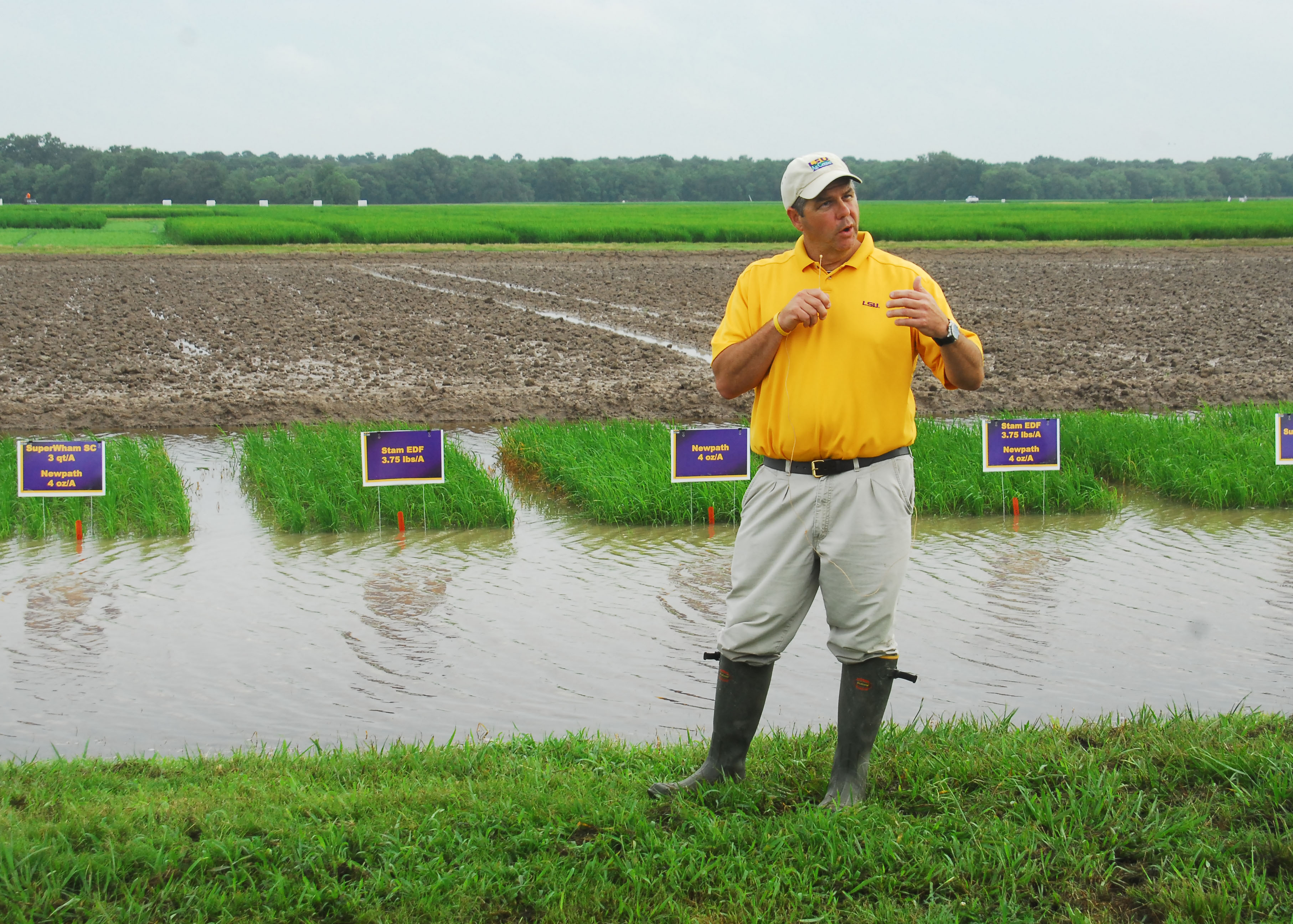 Eric Webster in front of rice test plot1.jpg thumbnail