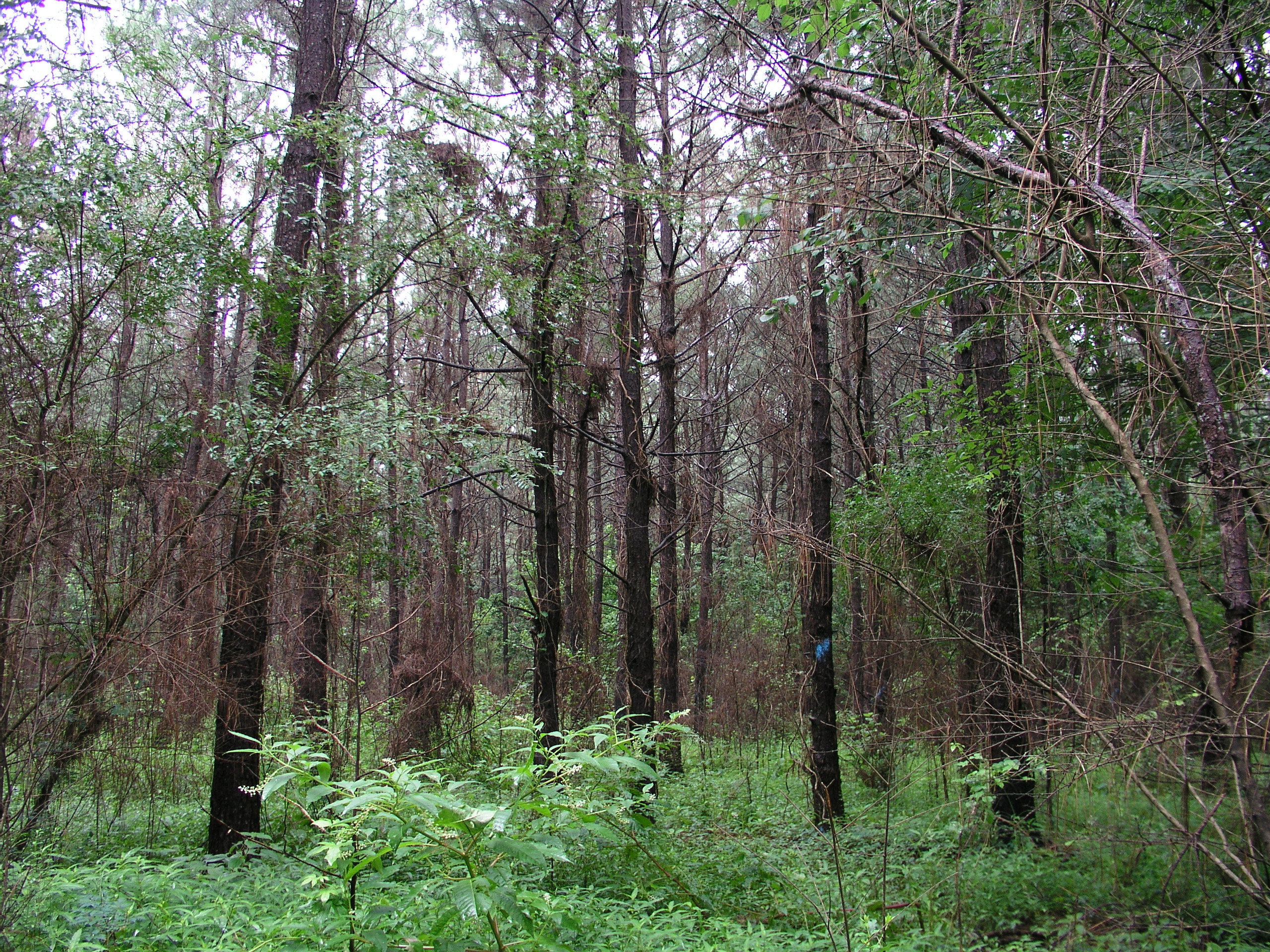 LSU AgCenter partners with Louisiana Tech University for timber tax workshop