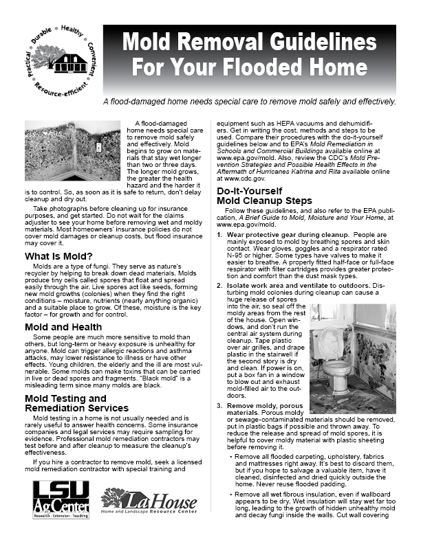 Mold Removal Guidelines for Your Flooded Home