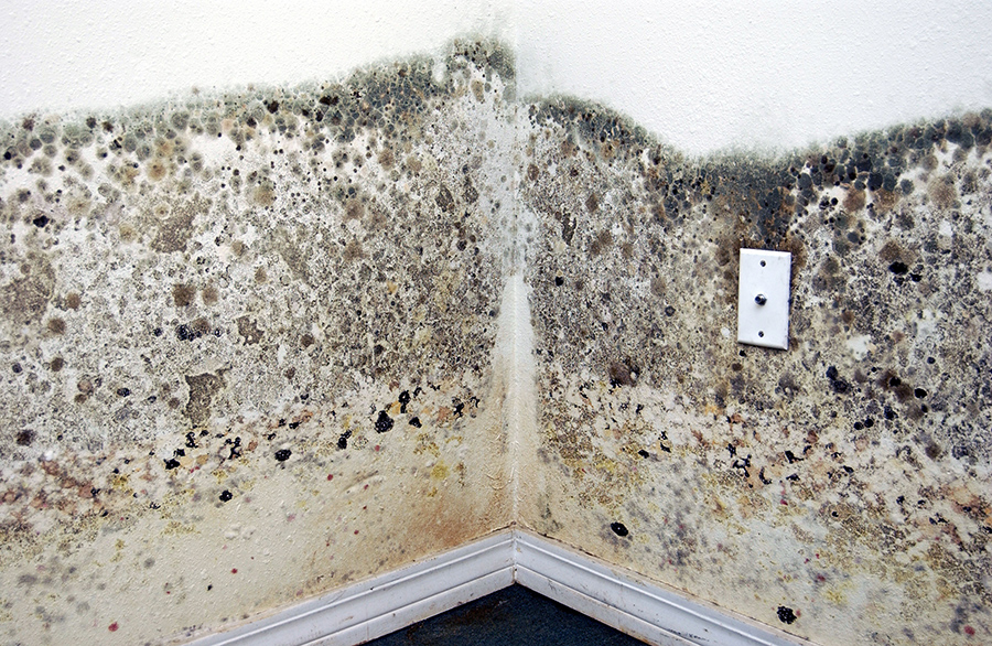 Pub2949b Moldy Walls Photo