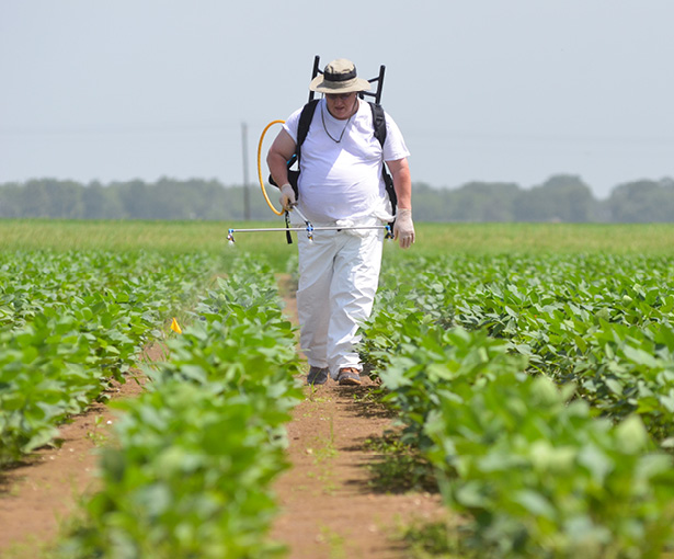 AgCenter plant pathologist Clayton Hollier sprays fungicides on soybean