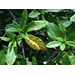 Azalea Bush Did Not Bloom This Year