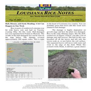 2020 Louisiana Rice Field Notes #3