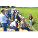 Neutralize soil acidity for better fertilizer results, farmers told at LSU AgCenter field day