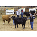 LSU AgCenter state livestock show set for Feb. 9-16 in Gonzales