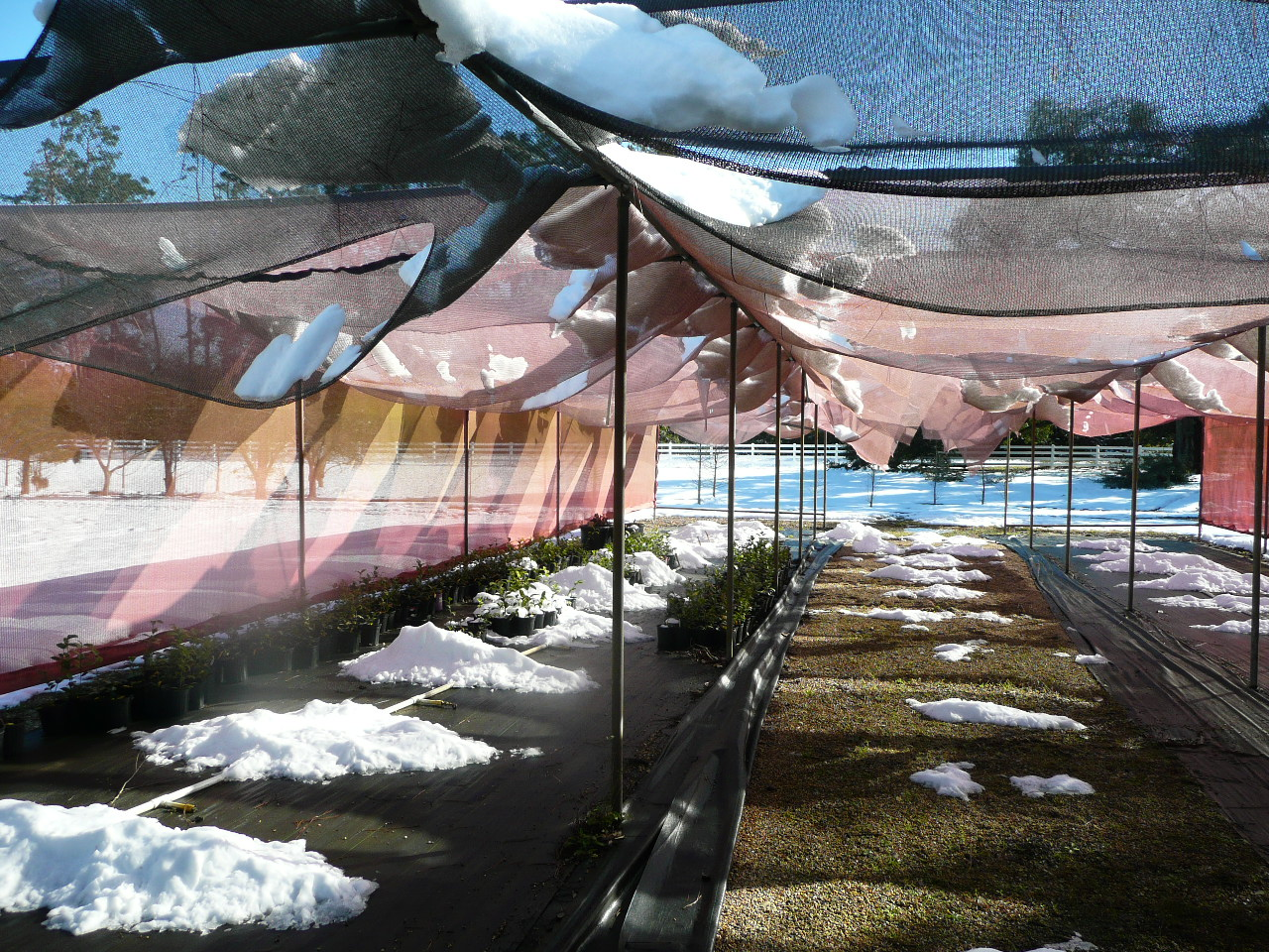 Snow damages Louisiana nursery industry, retail garden centers