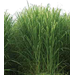 Louisiana Sugarcane Variety Identification Guide 2020: ​L 01-299