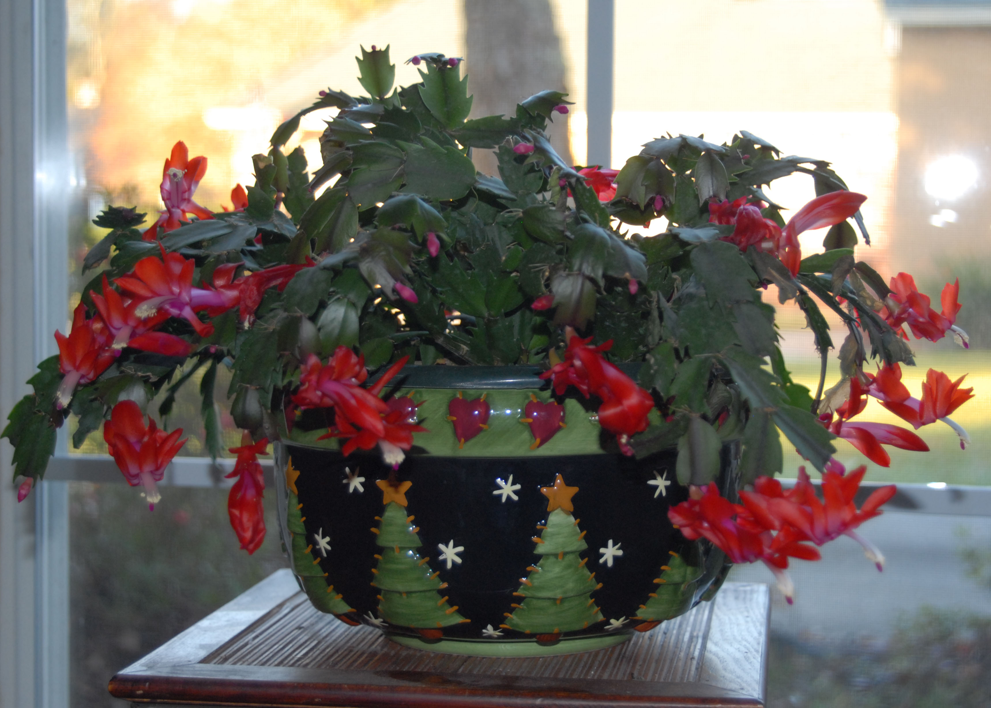 Take care of your holiday plants
