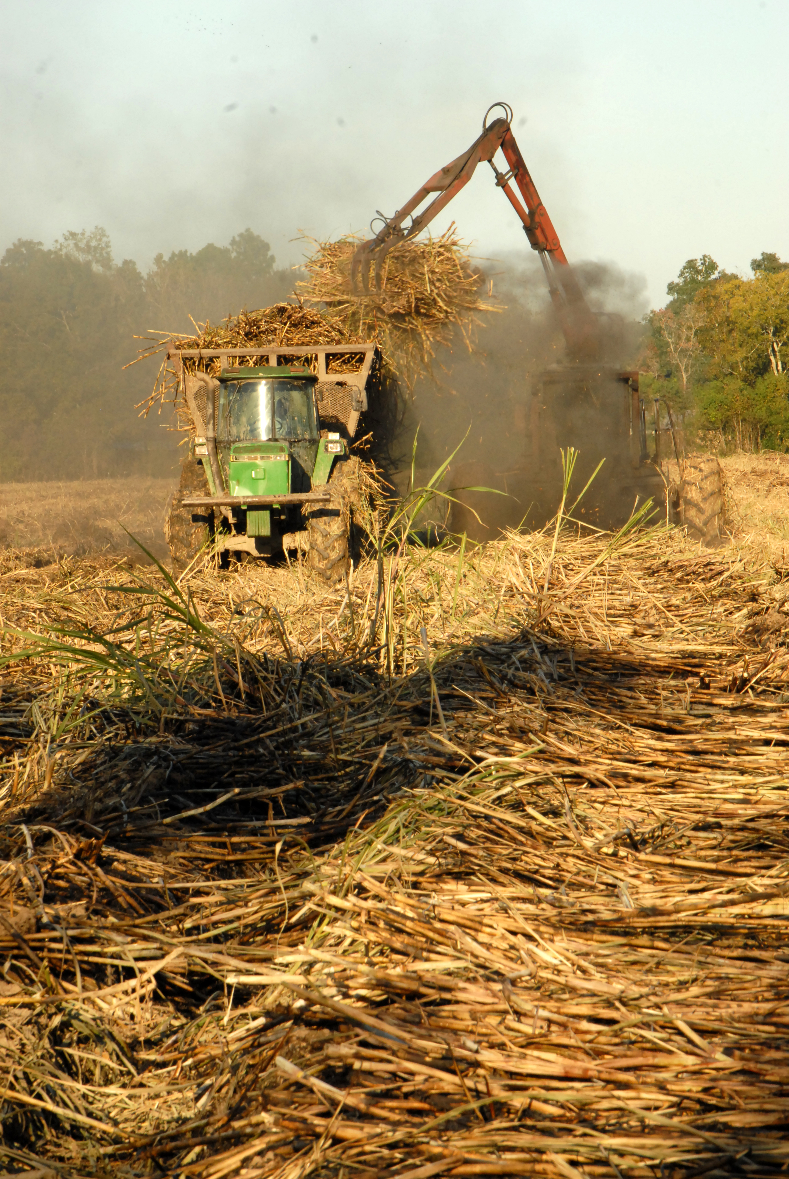 Sugarcane farmers find good harvest weather, improving prices