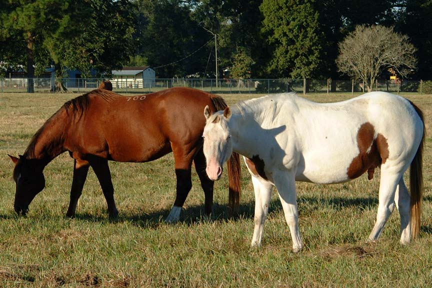 10 Tips For Controlling Parasites in Horses
