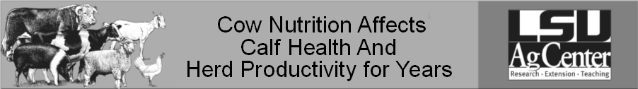 Cow Nutrition Affects Calf Health.png thumbnail
