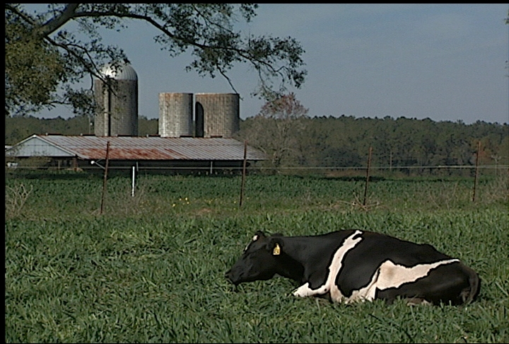 Economic outlook improving for dairy farmers