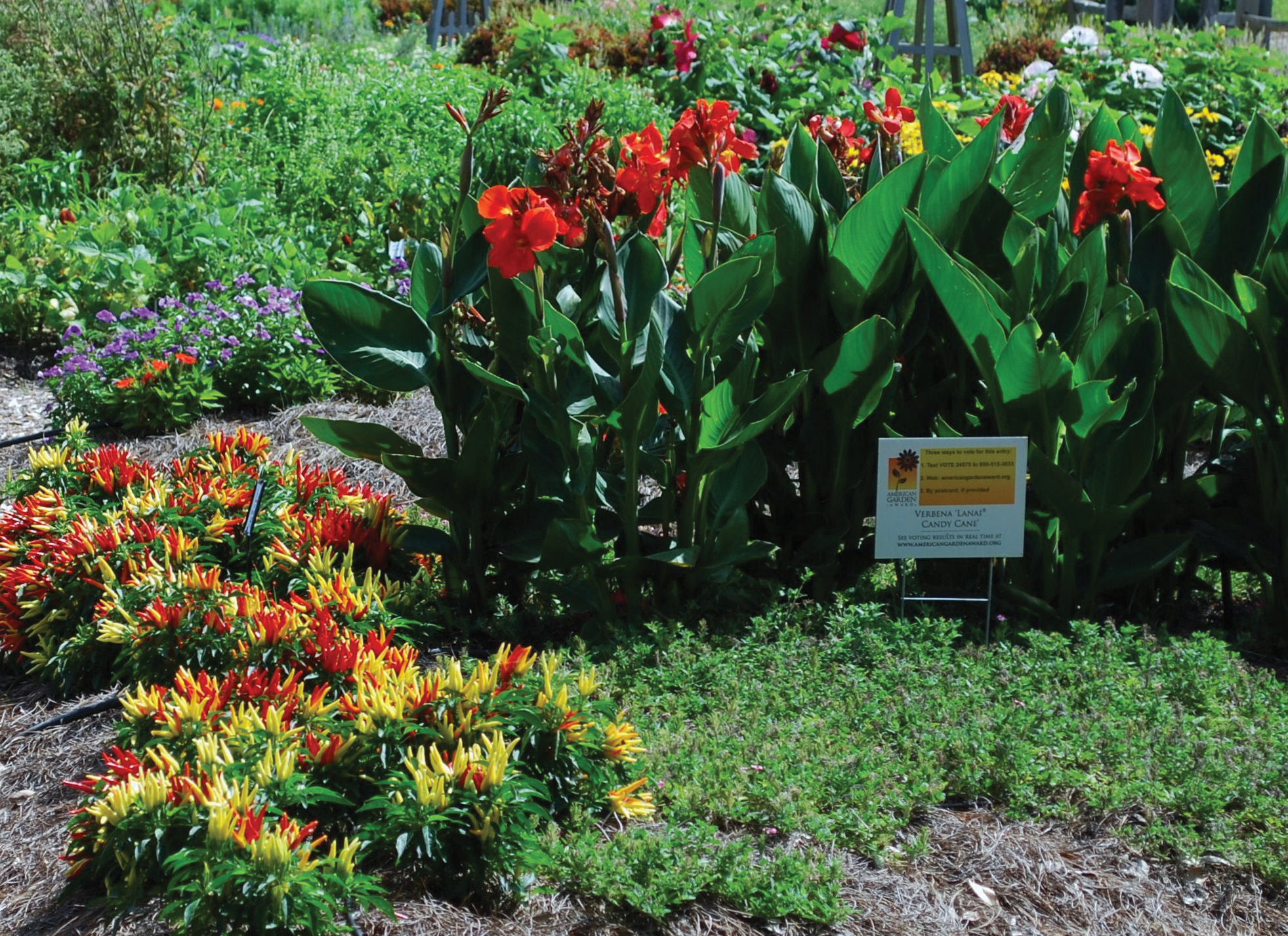 The All-America Selections Display Garden at the Botanic Gardens at Burden has won a national