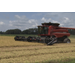 Yields mixed for rice harvest
