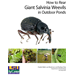 How to Rear Giant Salvinia Weevils in Outdoor Ponds