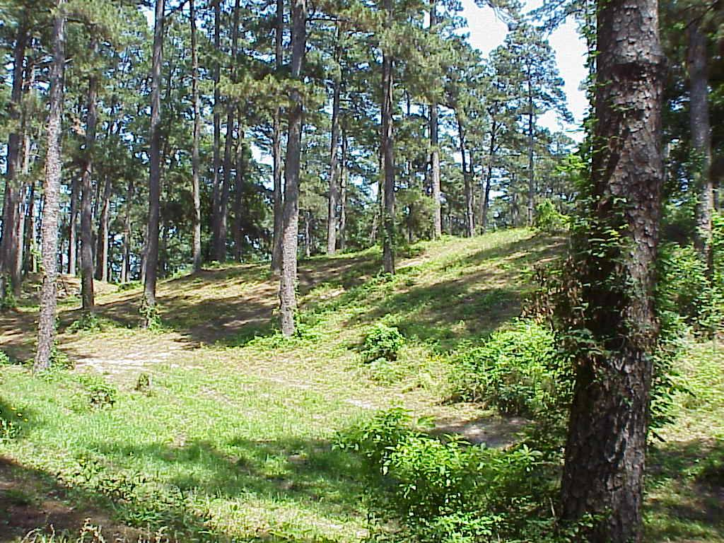 A picture of the rolling hills and timber at Fort Hill.