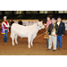 Louisiana youths named champions at 78th Annual LSU AgCenter Livestock Show