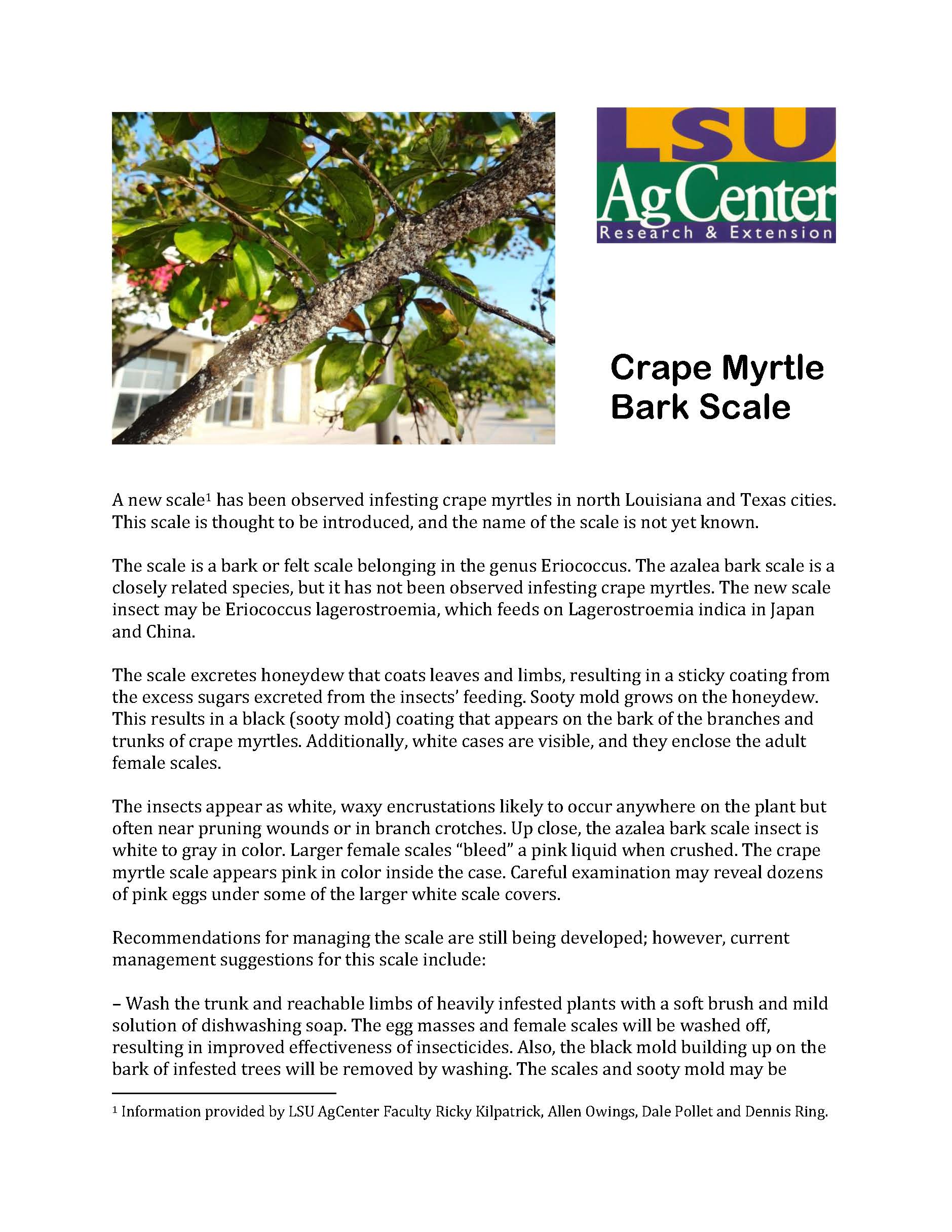 Crape Myrtle Bark Scale Fact Sheet