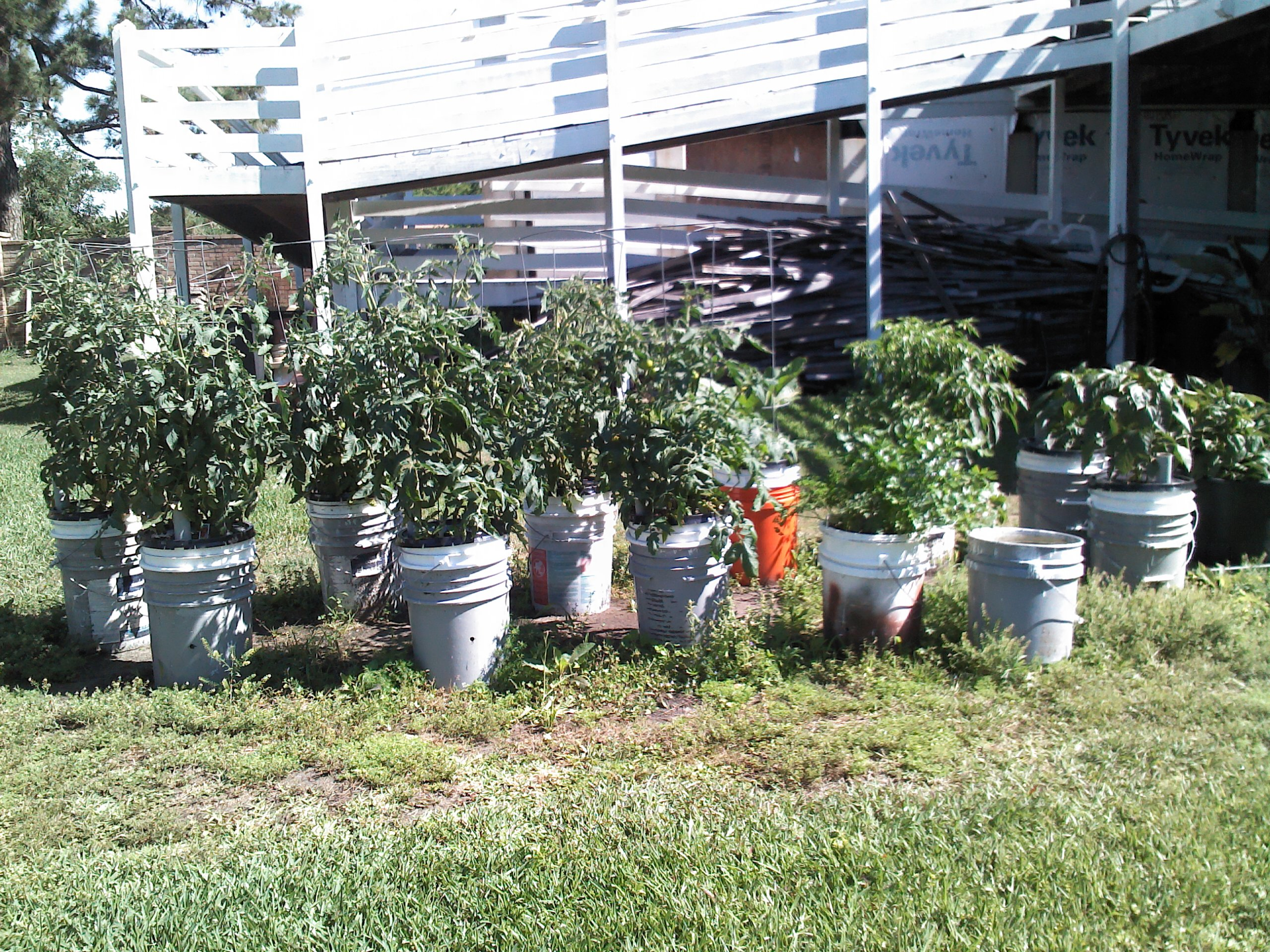 you can grow vegetables in containers