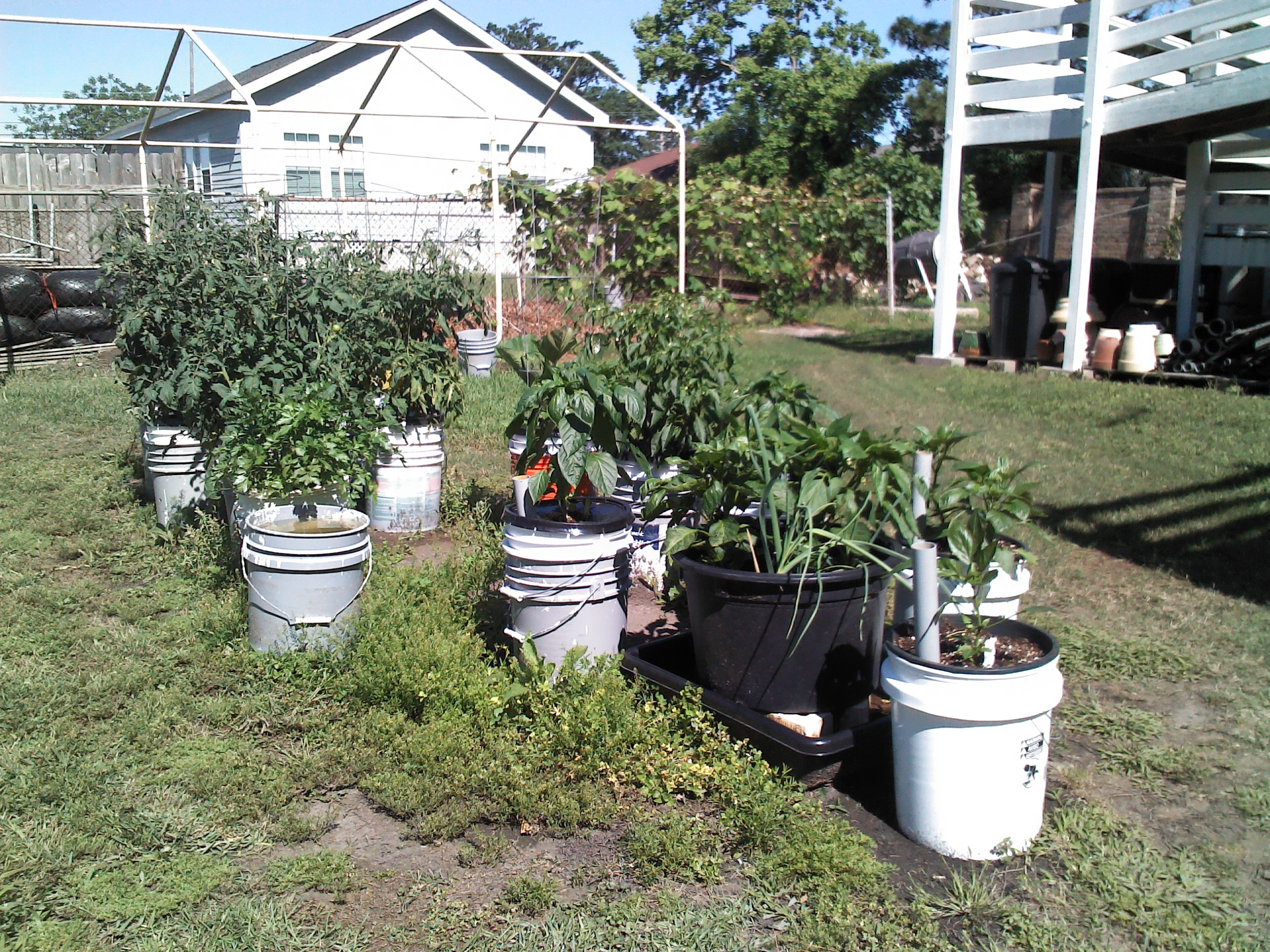 Ve able Container Garden 1 thumbnail