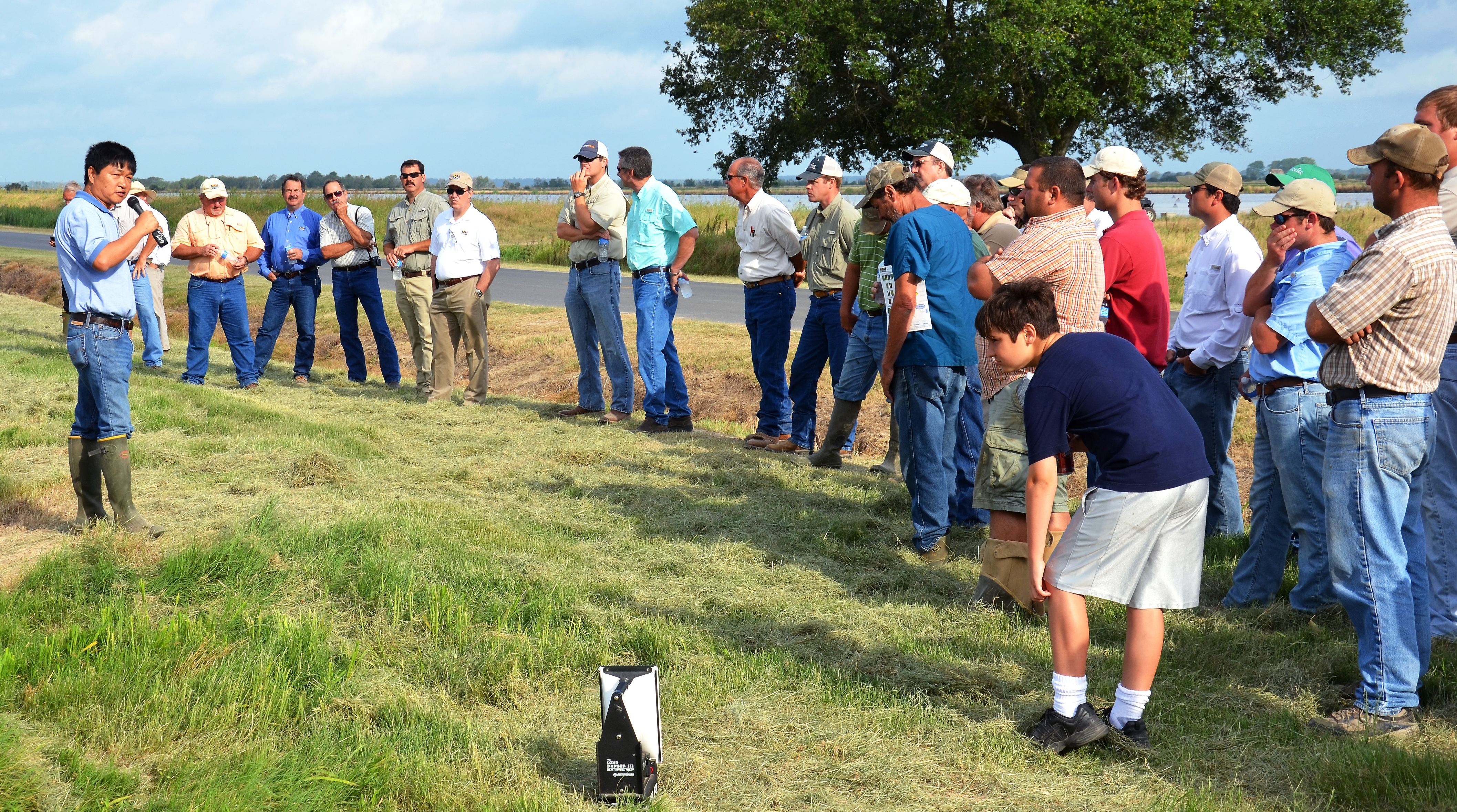 New rice lines, crop conditions featured at rice field day
