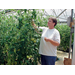 Growing Greenhouse Tomatoes Can Be Profitable