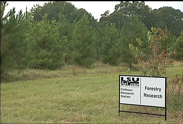 Research at LSU AgCenter station focuses on lifespan of wood