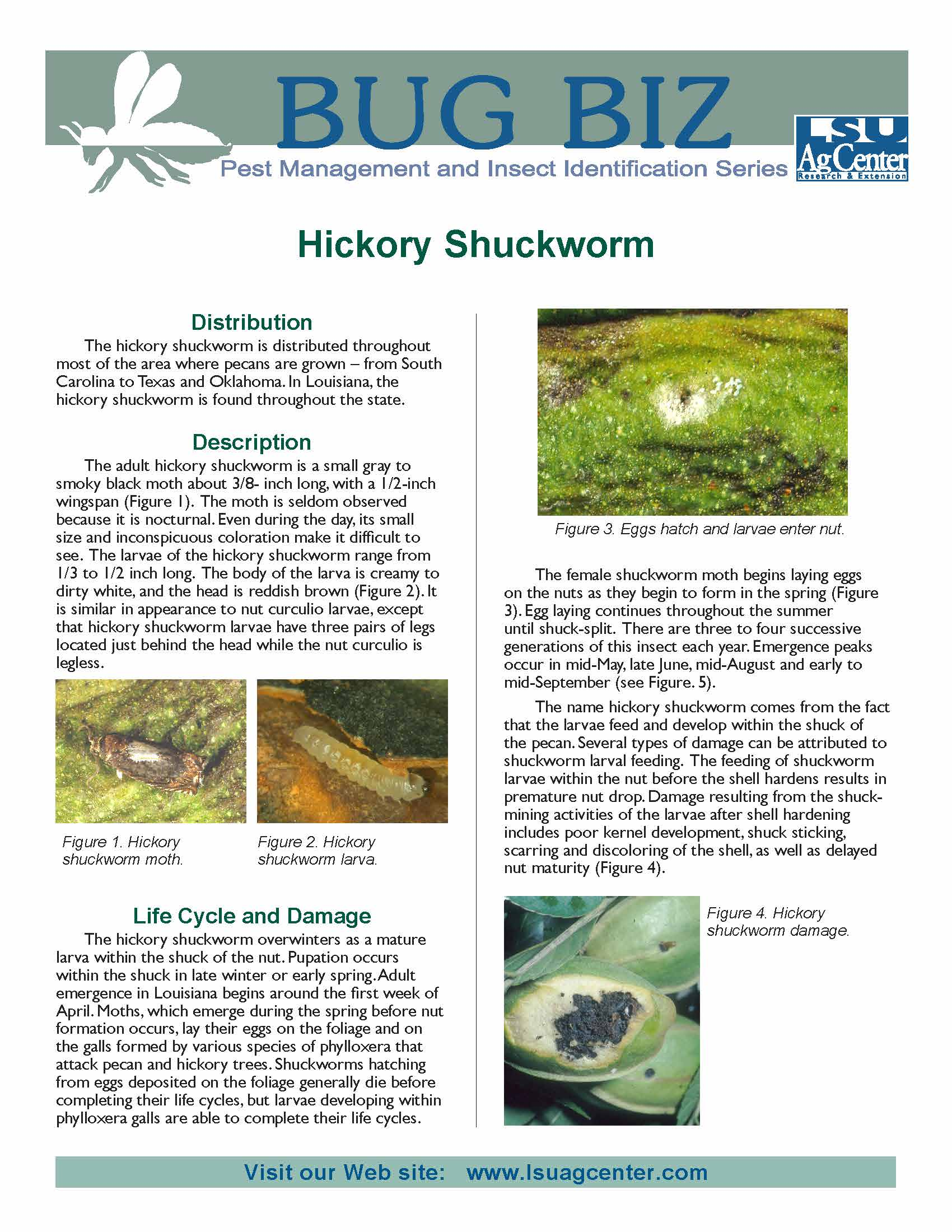 Bug Biz:  Hickory Shuckworm