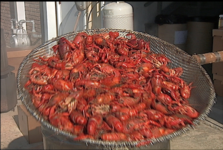 Smaller crawfish harvest expected this year